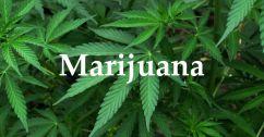 marijuana_head_lg
